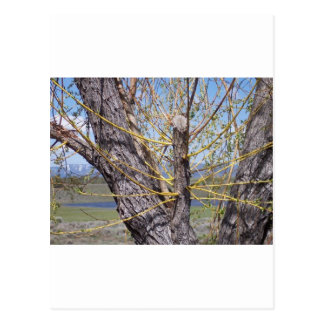 Tree Branch Sprouts Postcard
