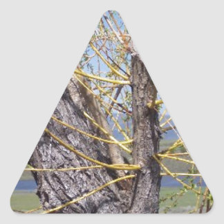 Tree Branch Sprouts Triangle Sticker