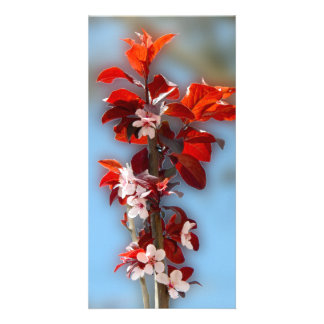 Tree branch with flowers red leaves card