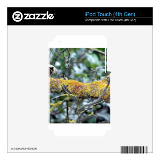 Tree branch with moss fungus iPod touch 4G decal