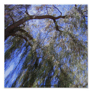 TREE BRANCHES ABOVE ME POSTER
