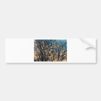 Tree Branches and Colorful Clouds Bumper Sticker