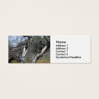 Tree Branches: Angel Live Oak Tree, Southern Texas Mini Business Card
