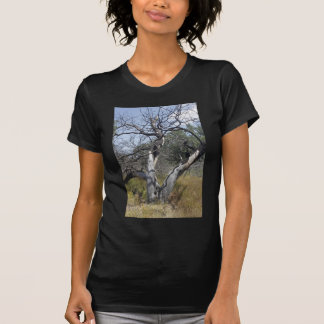 Tree Branches: Angel Live Oak Tree, Southern Texas Shirts