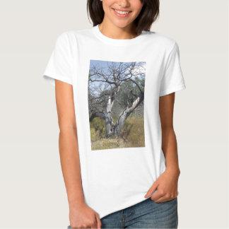Tree Branches: Angel Live Oak Tree, Southern Texas Tshirts