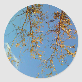 Tree Branches Classic Round Sticker