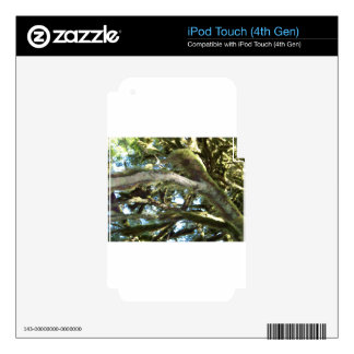 Tree Branches Decals For iPod Touch 4G