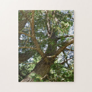 Tree Branches in Sunlight Jigsaw Puzzle