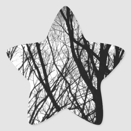 Tree Branches Into The Night Star Sticker
