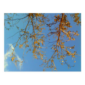Tree Branches Post Cards