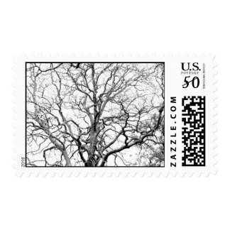 Tree branches postage