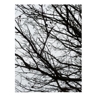 Tree Branches Postcard