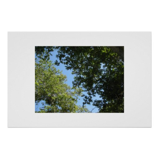 Tree Branches Poster or Print