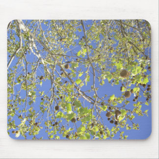 Tree Branches & Seed Balls Mouse Pad