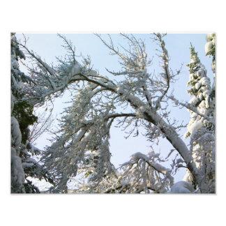 Tree Branches Slant Photographic Print