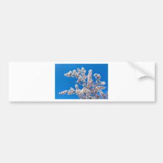 Tree branches with blooming white flowers bumper sticker