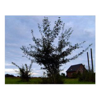 Tree Bush against the blue sky Postcard