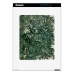 Tree by Lovis Corinth Skin For The iPad