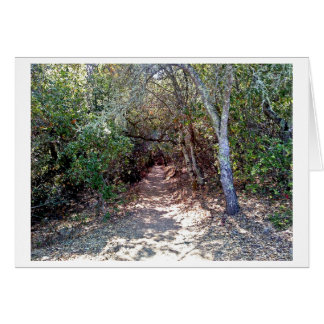 Tree Canopy at Trail Entrance Card