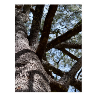 TREE CANOPY EUNGELLA NATIONAL PARK AUSTRALIA POSTCARD