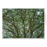 Tree Canopy Greeting Cards