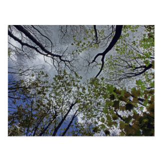 Tree canopy in the spring postcard