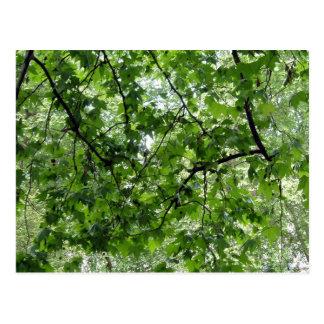 Tree Canopy Postcard