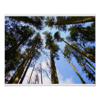 Tree Canopy Poster