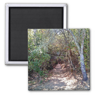 Tree Canopy Trail Refrigerator Magnets