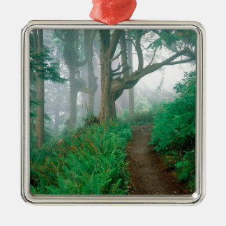 Tree Cape Lookout Woods Christmas Tree Ornaments