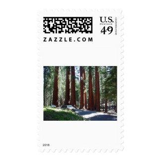 Tree Car Sequoia Park Stamp