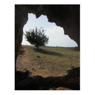 Tree Cave Travel Photography Postcard