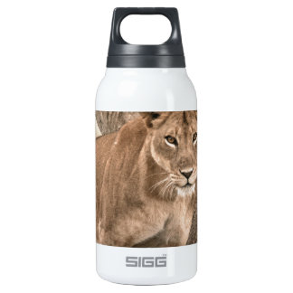 Tree-climbing lion, Uganda Africa Insulated Water Bottle