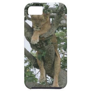 Tree climbing lioness (Panthera leo), Queen iPhone SE/5/5s Case