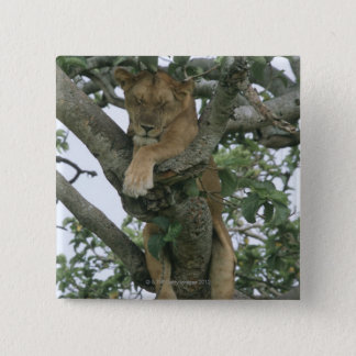 Tree climbing lioness (Panthera leo), Queen Pinback Button