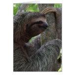 Tree Climbing Sloth Greeting Card