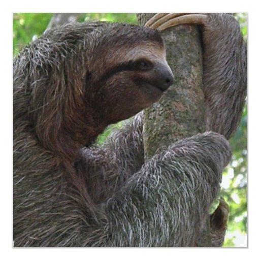 "Tree Climbing Sloth Invitation 5.25"" Square Invitation Card"