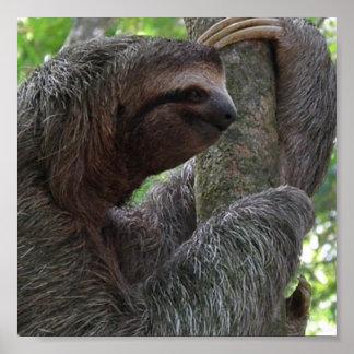 Tree Climbing Sloth Poster Print