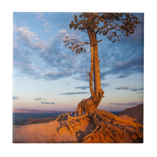 Tree Clings to Ledge, Bryce Canyon National Park Ceramic Tile