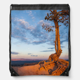 Tree Clings to Ledge, Bryce Canyon National Park Cinch Bags