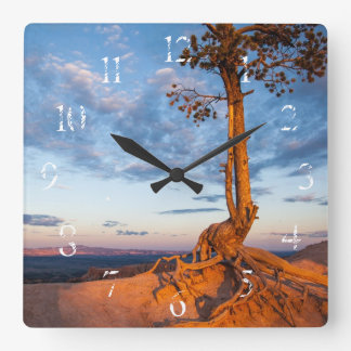 Tree Clings to Ledge, Bryce Canyon National Park Square Wall Clocks