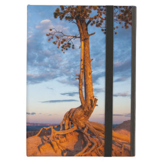 Tree Clings to Ledge, Bryce Canyon National Park iPad Air Case