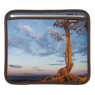 Tree Clings to Ledge, Bryce Canyon National Park iPad Sleeve