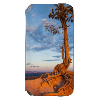 Tree Clings to Ledge, Bryce Canyon National Park iPhone 6/6s Wallet Case