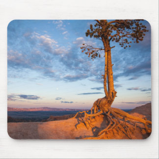 Tree Clings to Ledge, Bryce Canyon National Park Mouse Pad