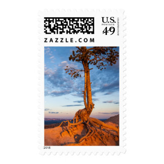 Tree Clings to Ledge, Bryce Canyon National Park Postage Stamp