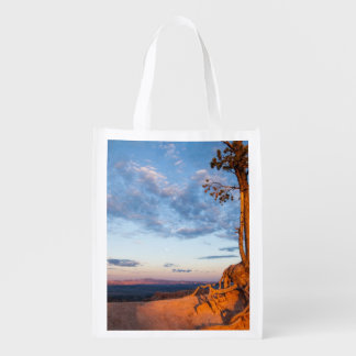 Tree Clings to Ledge, Bryce Canyon National Park Reusable Grocery Bag