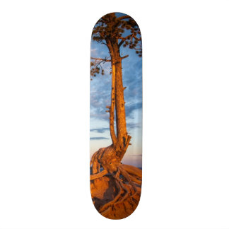 Tree Clings to Ledge, Bryce Canyon National Park Skateboard
