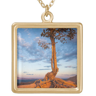 Tree Clings to Ledge, Bryce Canyon National Park Square Pendant Necklace