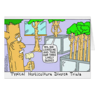 Tree Divorce: Funny Gifts Tees & Collectibles Card